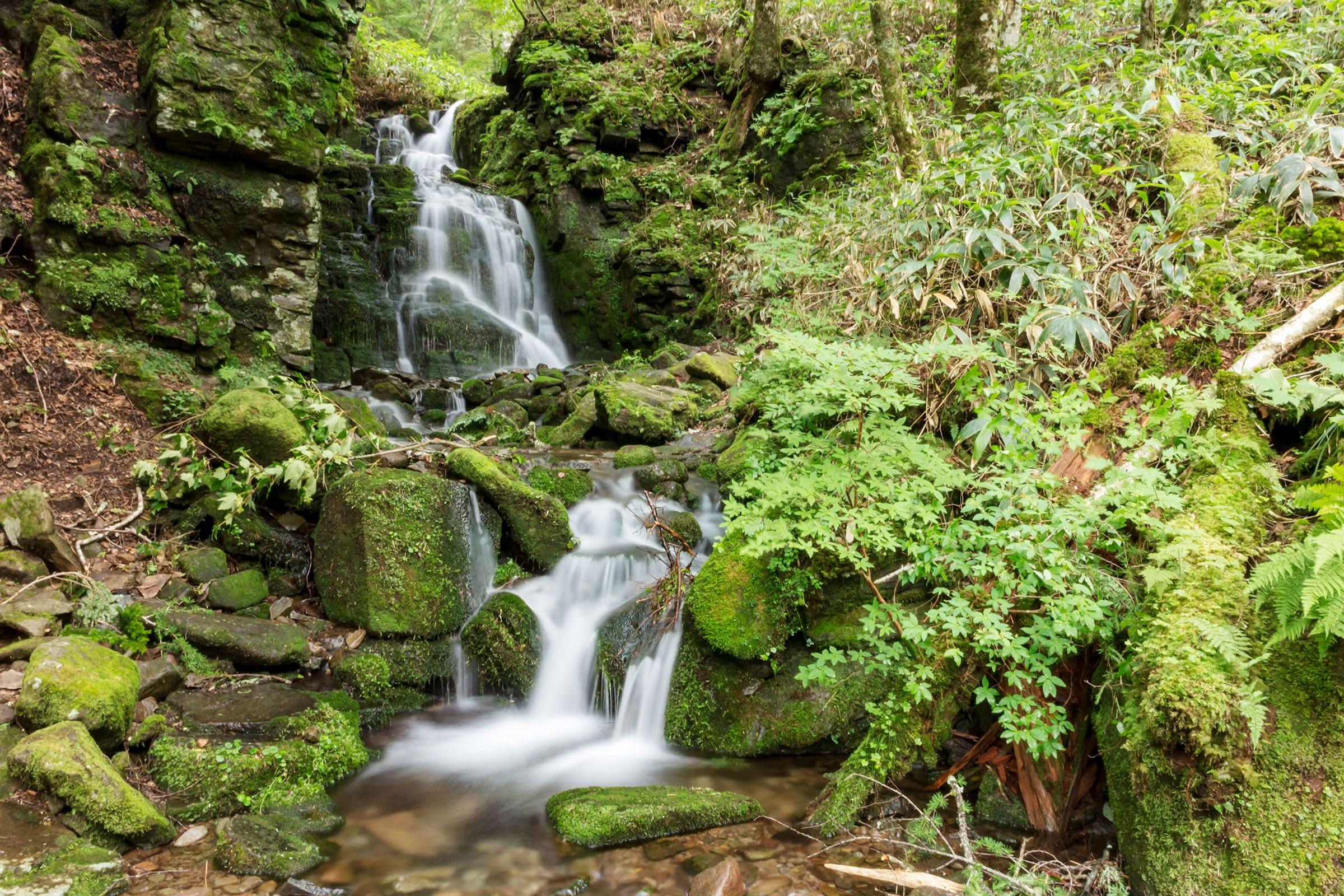 蓼科山の広大な自然に囲まれた御泉水自然園にある蓼仙の滝
