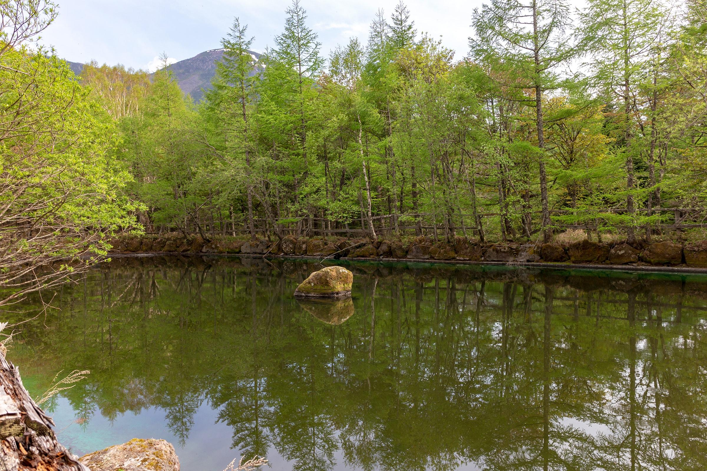 新緑に囲まれた静寂のカラマツ池