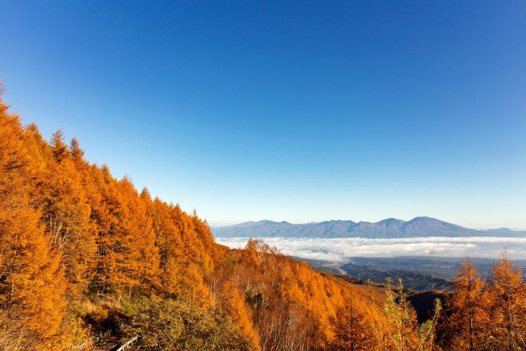 佐久市と白樺高原を結ぶ蓼科スカイラインから見るからまつの紅葉と雲海