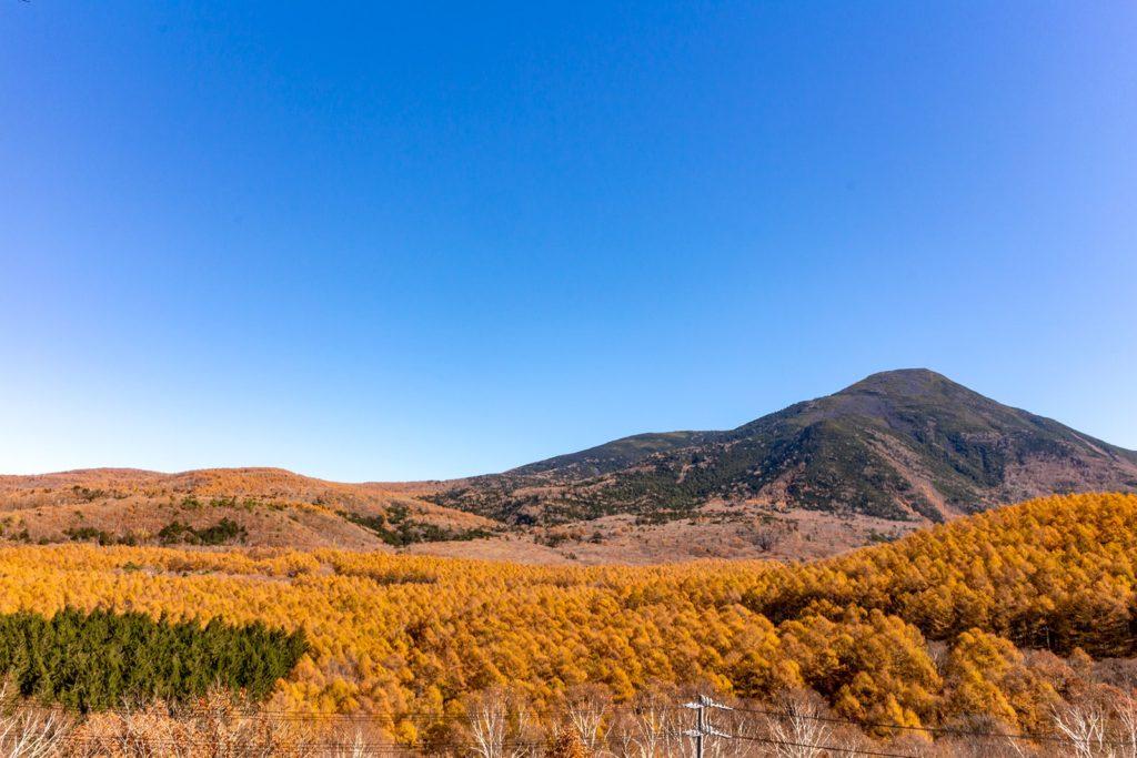 蓼科山麓の白樺高原を1色に染めるからまつ林の紅葉
