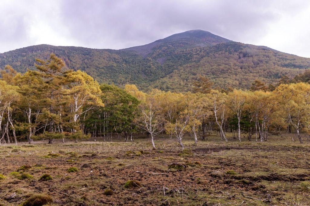 少し色づき始めた白樺高原、西側から見た蓼科山