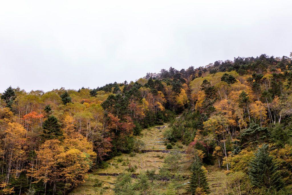 10月4日(金)現在の蓼科山(大河原峠周辺)の紅葉状況
