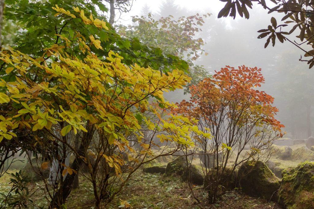 霧の中でも間近に紅葉を楽しめる御泉水自然園