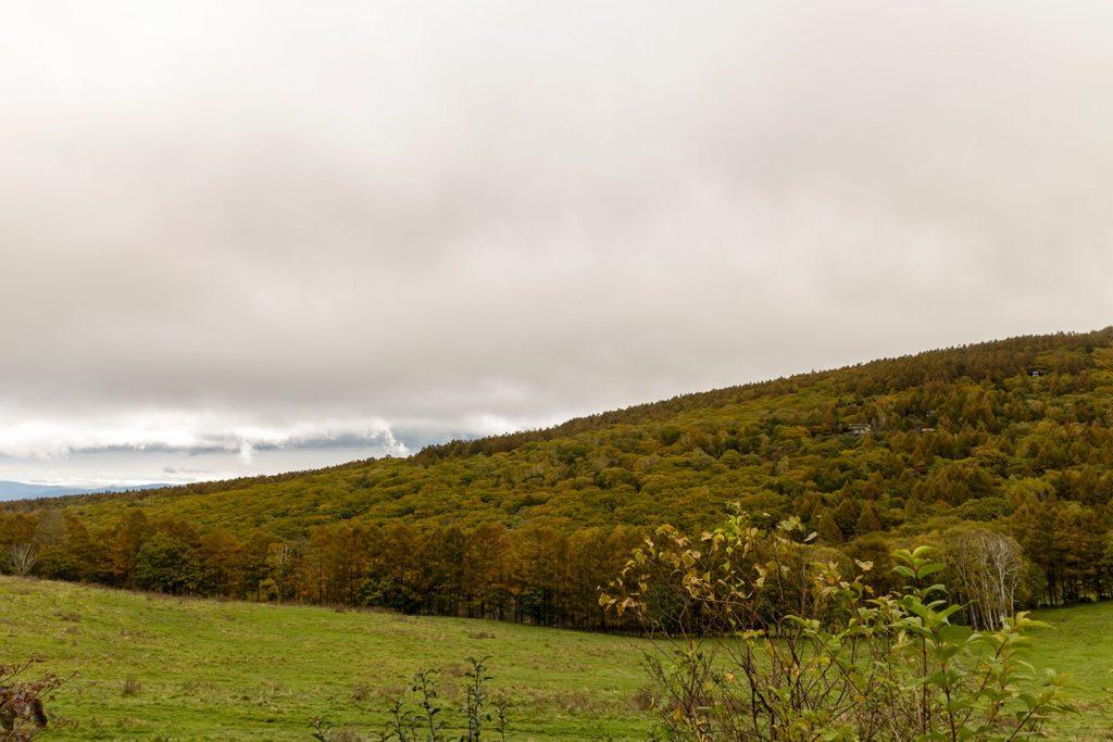 白樺高原にある蓼科第二牧場では、牧場奥の山肌が色づき始めてきており、牧歌的な風景とともに目を楽しませています。