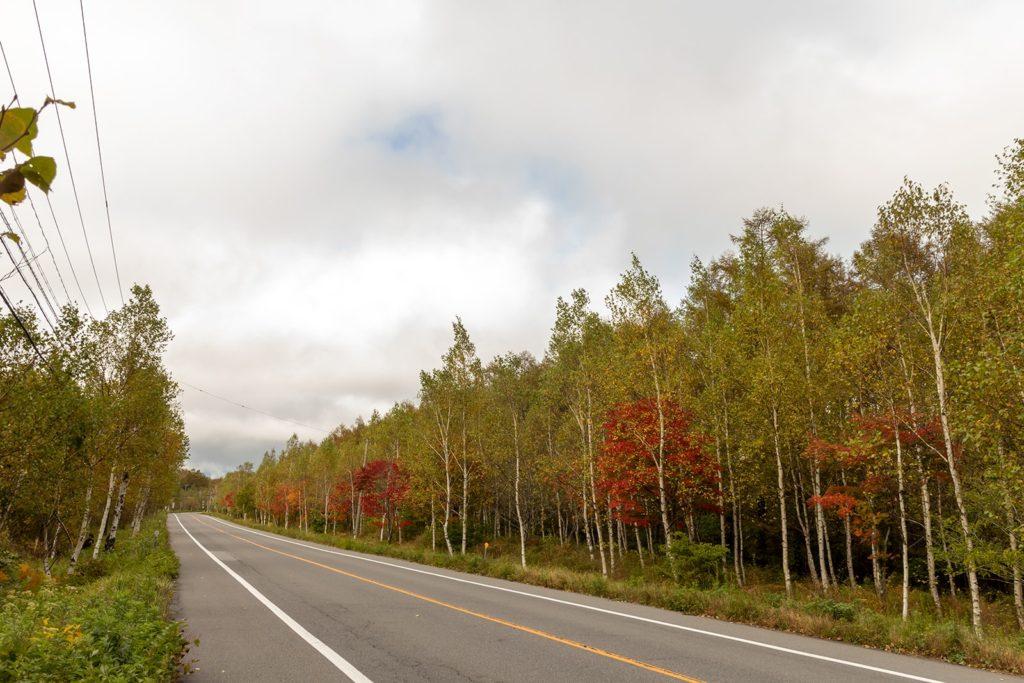 立科町の里エリアから白樺高原に向かう白樺の道も色づき始めてきています。