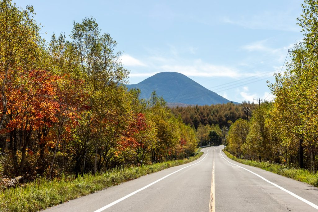 蓼科山へ向かう「白樺の道」でも広葉樹が彩りゆたかに色づき紅葉の見ごろとなりつつあります