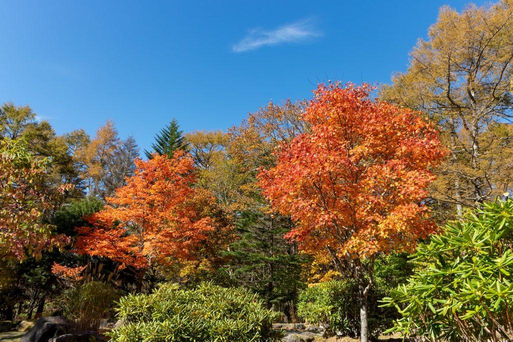 青い空と紅いもみじのコントラストが美しい御泉水自然園