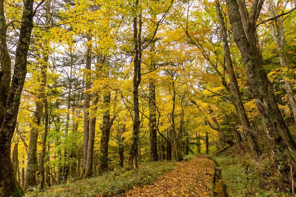 江戸時代に掘られた灌漑用水路である塩沢堰の横を紅葉に囲まれて歩く道