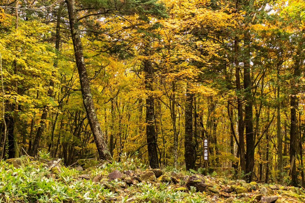 秋の紅葉に彩られた御柱の道は軽いトレッキングをしながらの紅葉狩りを楽しめます。