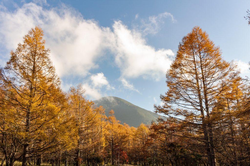 御泉水自然園から見る蓼科山と色づいたからまつの木々