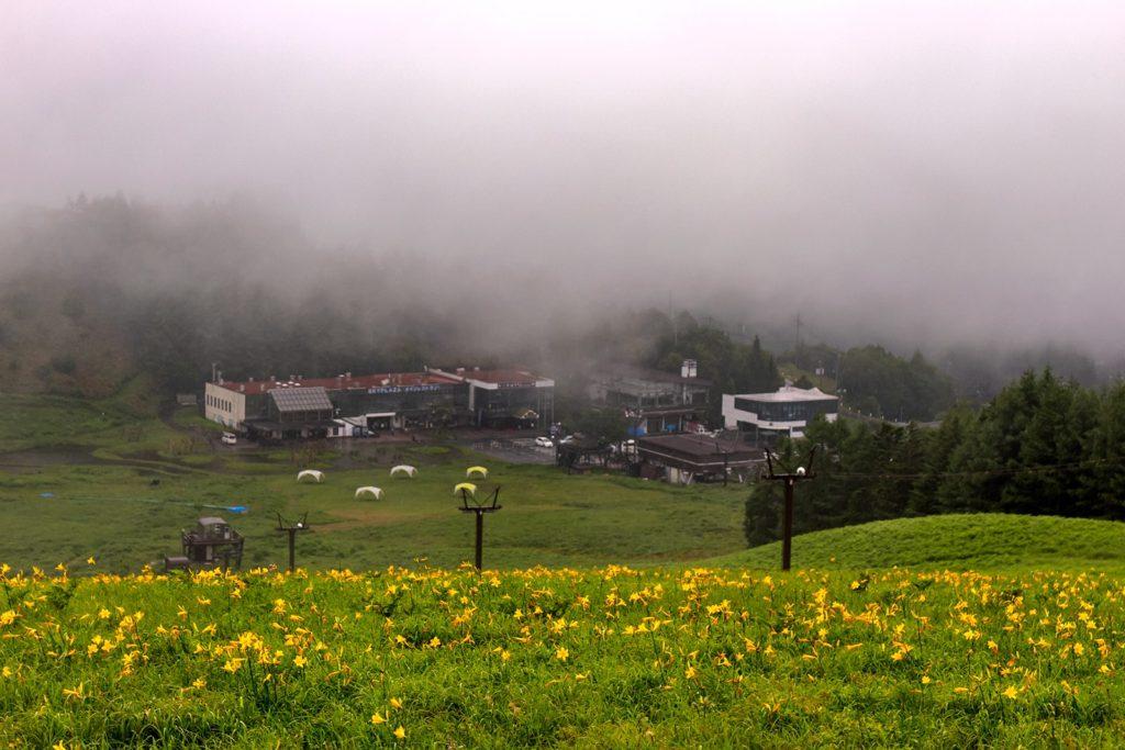 車山高原スキー場でもっとも大きな群生地が拡がるのがスカイライナーリフト横