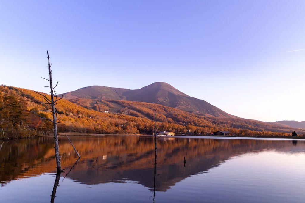 夕陽に染められた蓼科山と白樺高原の紅葉:女神湖畔から