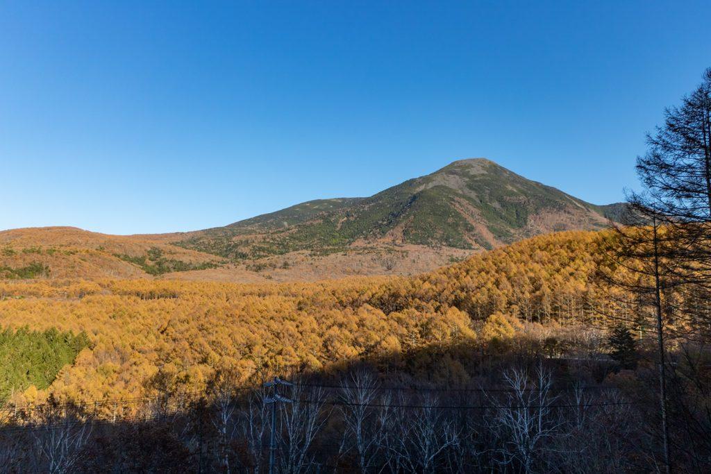 蓼科山をバックに色づく広大なからまつ林