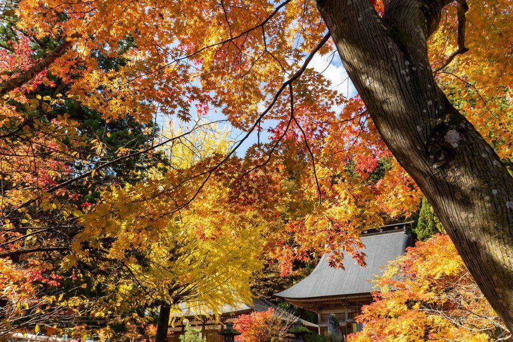イチョウにカエデと言った秋の紅葉の主役に彩られた境内