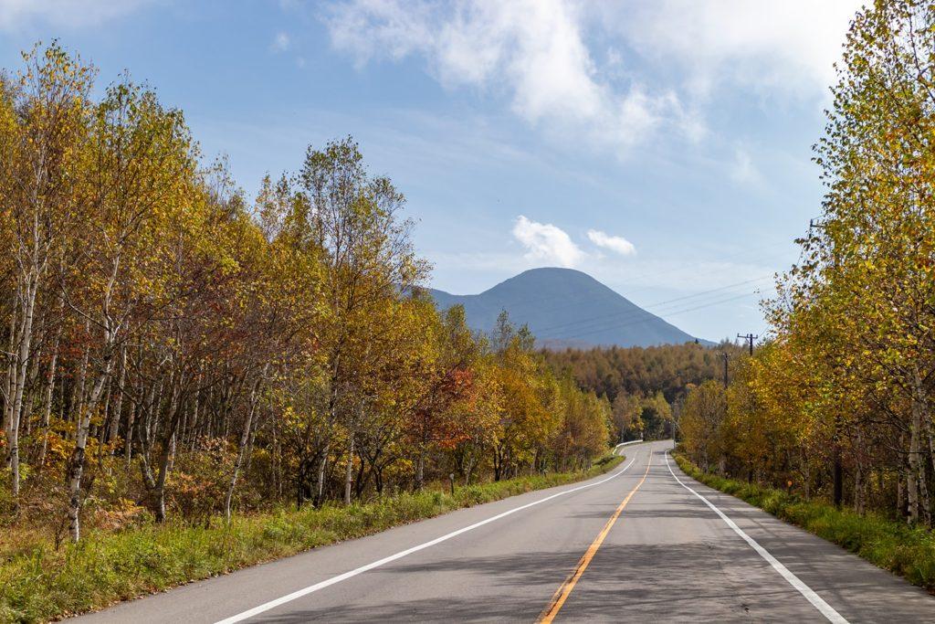 両側を白樺林の紅葉に挟まれ美しい景色の白樺の道