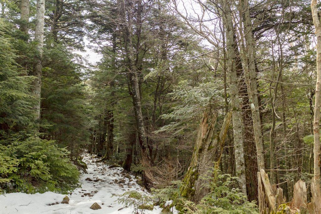 蓼科山登山道の様子。2020年4月2日現在