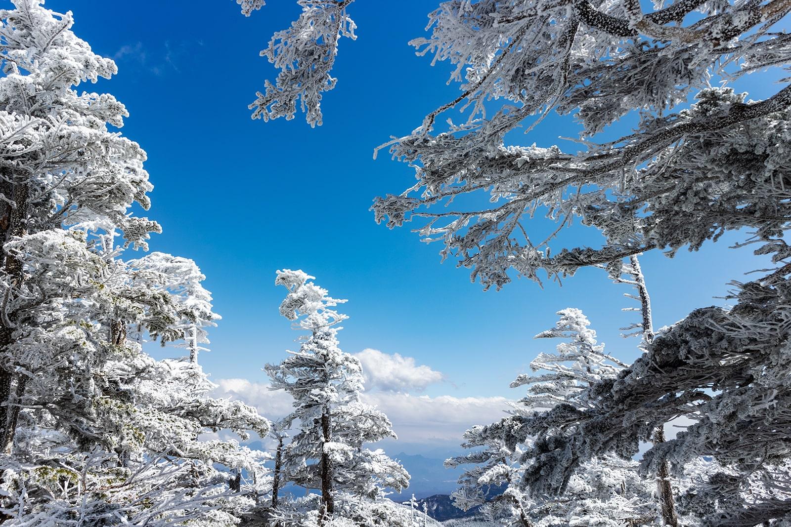 白い雪に覆われた木々と八ヶ岳ブルーのコントラストが美しい北横岳。