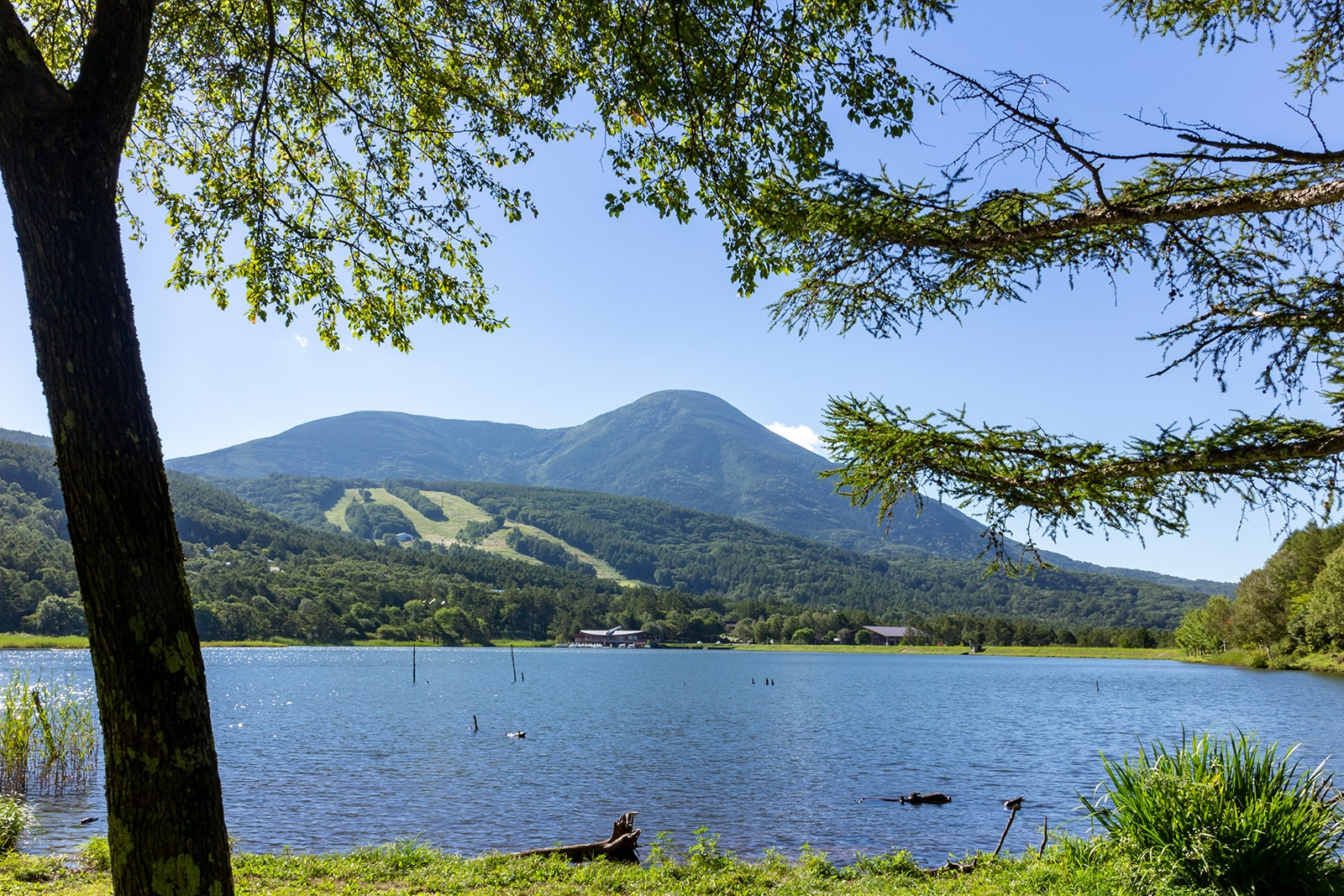 白樺高原にあるふたつの湖のひとつ、女神湖