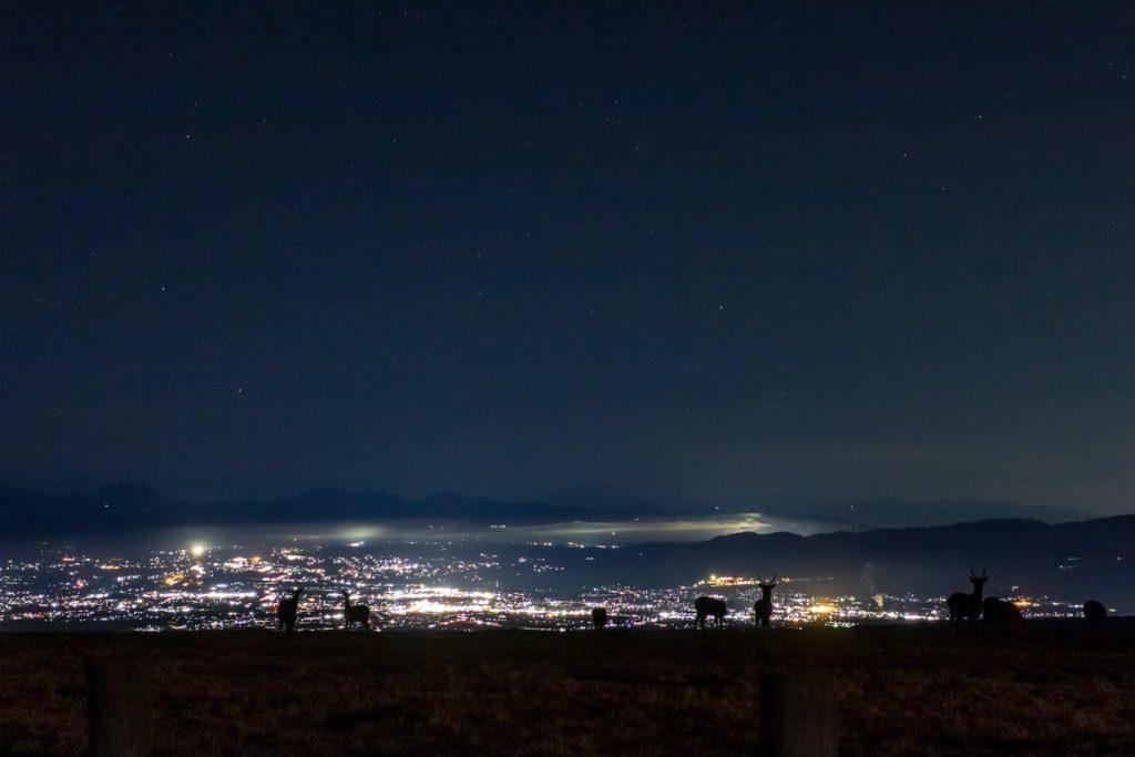 冬にしか見れない光景もあります。これは夜景の前で草を食む野生の鹿たち