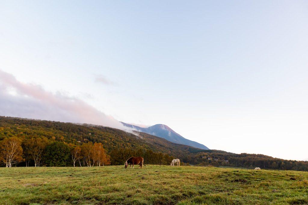 2020年10月11日の信州たてしな 白樺高原の紅葉