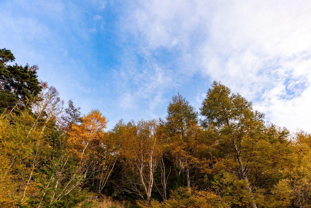 2020年10月16日の信州たてしな 白樺高原の紅葉1