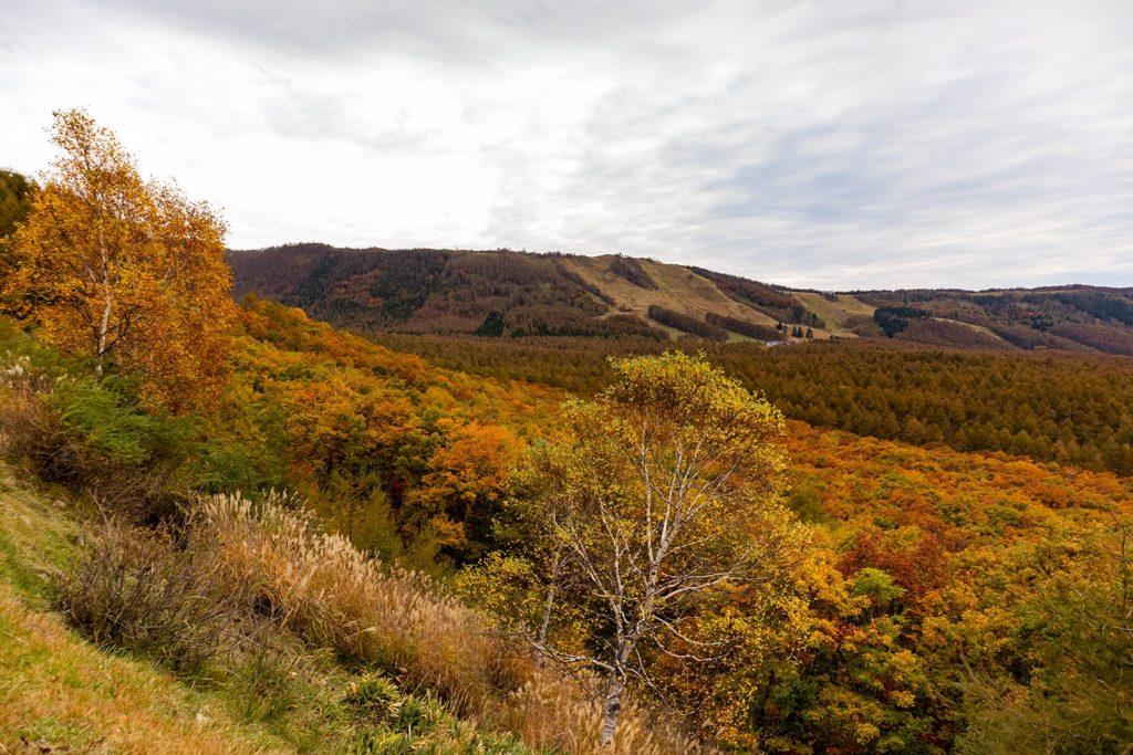 2020年10月16日の信州たてしな 白樺高原の紅葉2