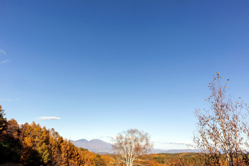 2020年11月4日白樺高原の北の端にある三望台からの景色。遠くの浅間山と真っ青な青空、目の前で色づきはじめたカラマツの木々。