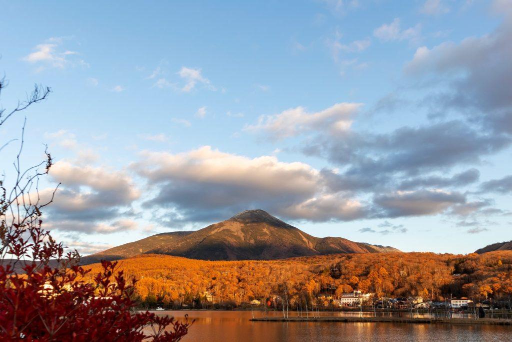 2020年11月4日白樺湖畔からの景色。カラマツの木が色づいてる。