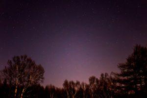 2020年11月25日、蓼科第二牧場からの星空。白樺林の上空に輝くりゅう座などの星々。