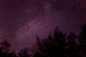 2020年12月5日、蓼科第二牧場からの星空。木々の上にハッキリ見える天の川とはくちょう座。