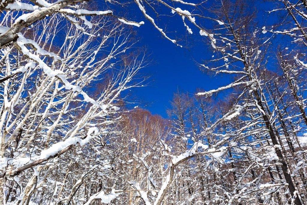 スタートすぐの登りには木々も多く自然を満喫できる